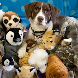 Plush toy animals for Gifts