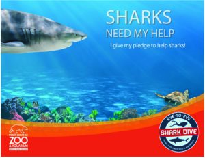 shark pledge page