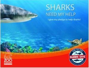 shark pledge page