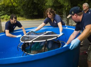 aquarists shipping ray from tank