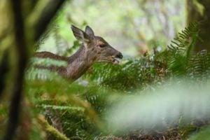 deer park bioblitz