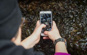 phone beach bioblitz