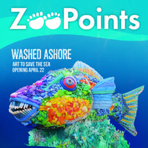 Zoopoints fish